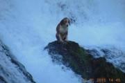Σκύλος σε καταρράκτη (1)