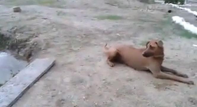 Σκύλος «σώζει» τον ιδιοκτήτη του που έχει πάει για κολύμπι