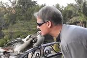Ταΐζοντας Kookaburras