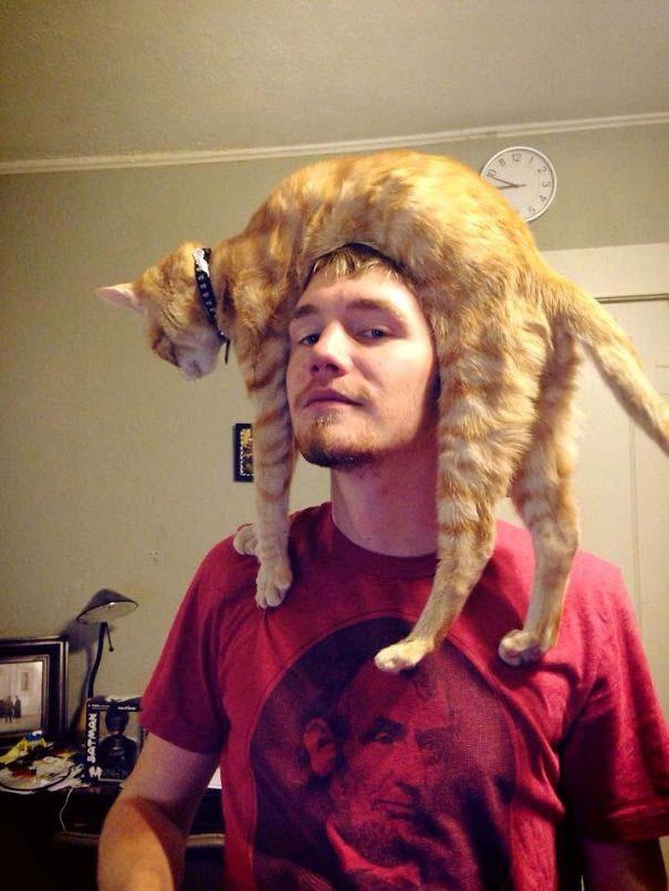 Άνθρωποι που φορούν γάτες για καπέλο (10)