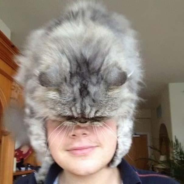 Άνθρωποι που φορούν γάτες για καπέλο (12)