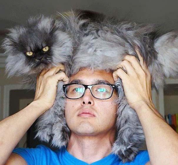 Άνθρωποι που φορούν γάτες για καπέλο (23)