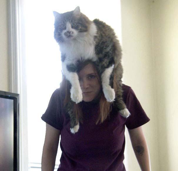 Άνθρωποι που φορούν γάτες για καπέλο (25)