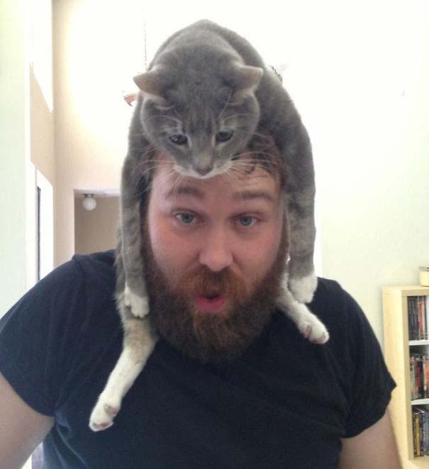 Άνθρωποι που φορούν γάτες για καπέλο (28)