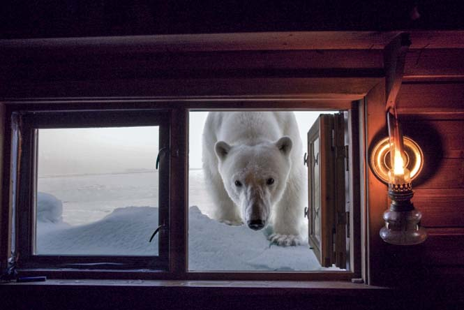 Εκπληκτικές φωτογραφίες της άγριας ζωής από τον Paul Nicklen (11)