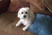 Ένοχος σκύλος