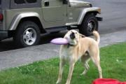 Φωτογραφίες σκύλων που τραβήχτηκαν την τέλεια στιγμή (1)