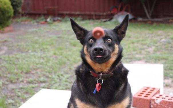 Φωτογραφίες σκύλων που τραβήχτηκαν την τέλεια στιγμή (6)
