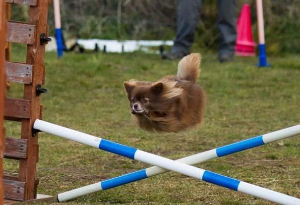 Φωτογραφίες σκύλων που τραβήχτηκαν την τέλεια στιγμή (11)