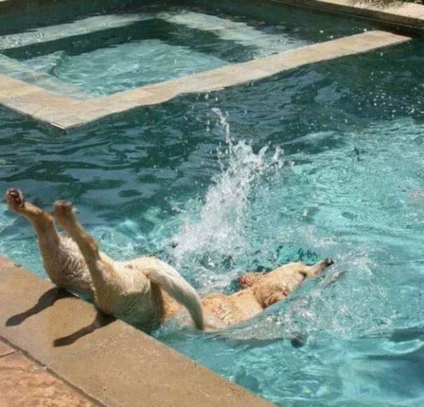 Φωτογραφίες σκύλων που τραβήχτηκαν την τέλεια στιγμή (12)
