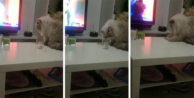 Γάτα με απίστευτο ύφος πριν κάνει ζημιά