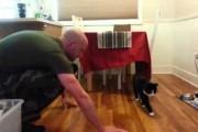 Γάτες υποδέχονται τους ιδιοκτήτες τους που γύρισαν από τον στρατό