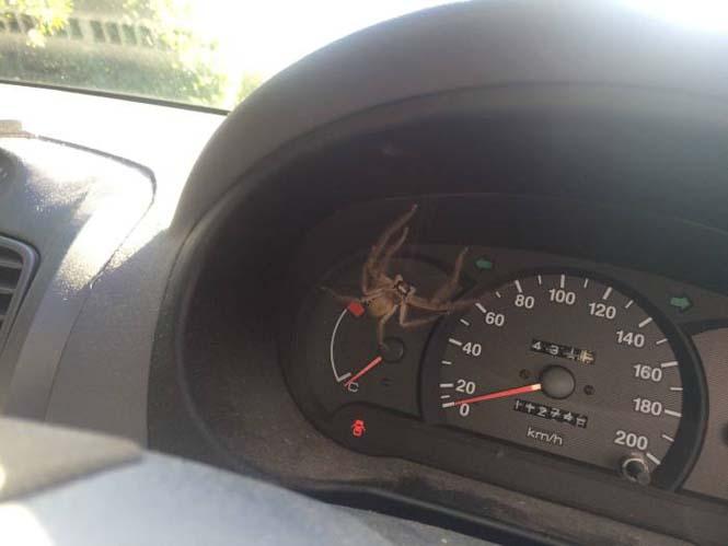 Κάτι που δεν θα ήθελες να δεις στο αυτοκίνητο σου (4)