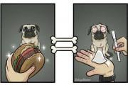 Ο κόσμος μέσα από τα μάτια του σκύλου (4)