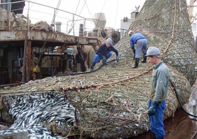 Μεγάλη ψαριά περιείχε κάτι απρόσμενο (2)