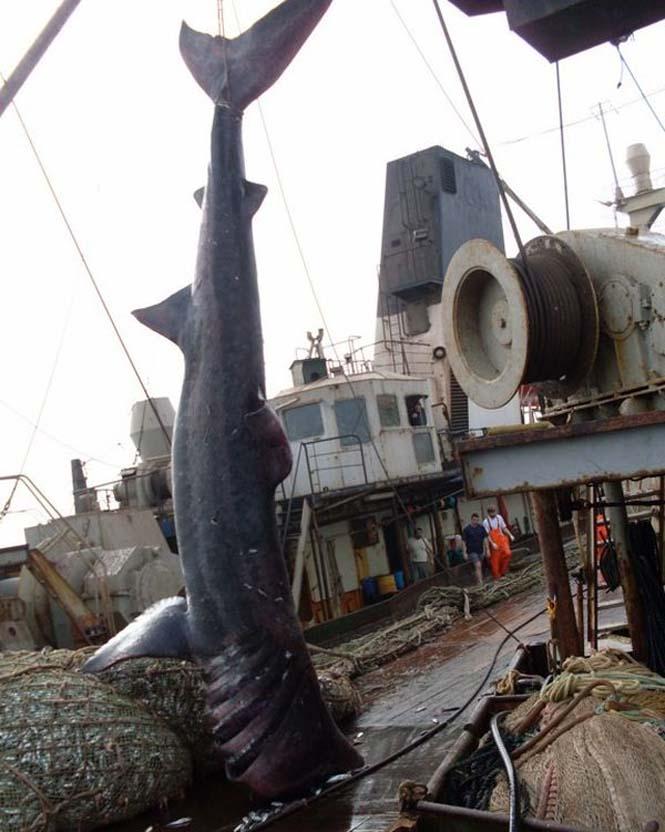 Μεγάλη ψαριά περιείχε κάτι απρόσμενο (6)