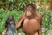 Η νέα διαφήμιση της Google με ασυνήθιστες φιλίες ζώων θα σας κάνει να λιώσετε