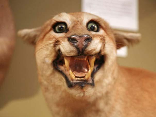 Όταν η ταρίχευση ζώων πάει στραβά (2)