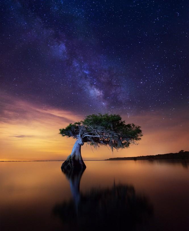 Μοναχικό δένδρο σε λίμνη | Φωτογραφία της ημέρας