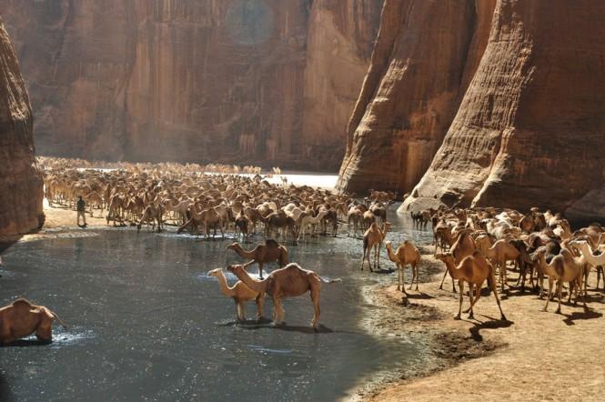 Εκεί που πάνε οι καμήλες για να δροσιστούν   Φωτογραφία της ημέρας