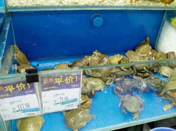 Πράγματα που θα δεις μόνο σε ένα Κινέζικο σούπερ μάρκετ (7)