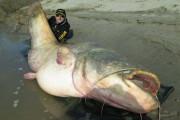 Ψαράς έπιασε γιγαντιαίο γατόψαρο (6)