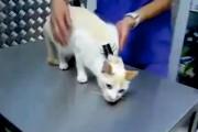 Πως «απενεργοποιείται» μια γάτα