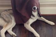 Σκύλοι που δεν τα πάνε καλά με το κρυφτό (16)
