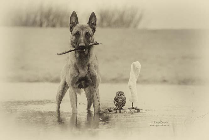 Σκύλος και κουκουβάγια σε μια ασυνήθιστη φιλία (3)