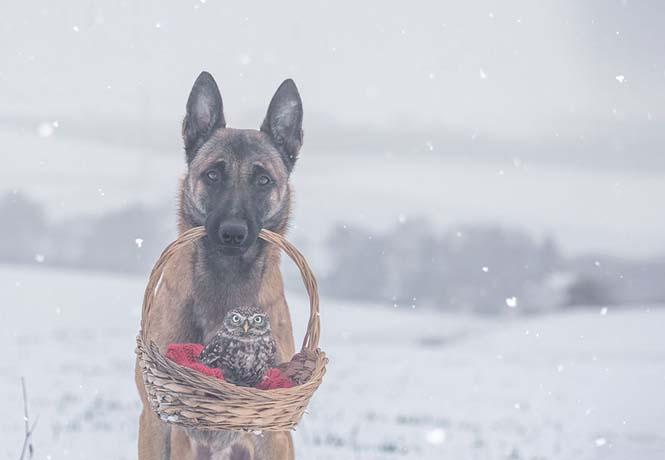 Σκύλος και κουκουβάγια σε μια ασυνήθιστη φιλία (5)