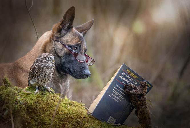 Σκύλος και κουκουβάγια σε μια ασυνήθιστη φιλία (12)