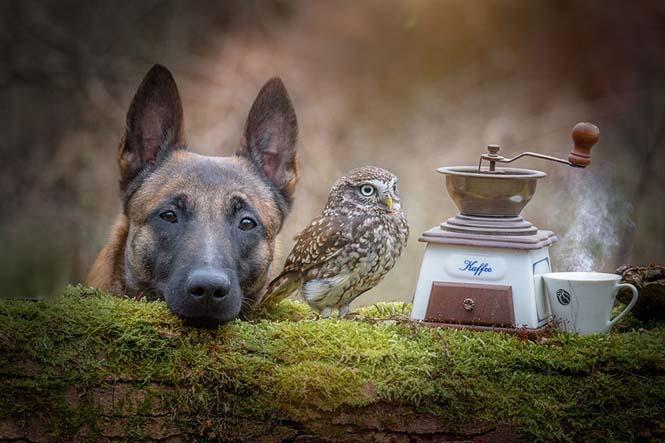 Σκύλος και κουκουβάγια σε μια ασυνήθιστη φιλία (13)