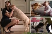 Σκύλος ο καλύτερος σύντροφος