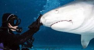 Στο εσωτερικό του στόματος ενός καρχαρία