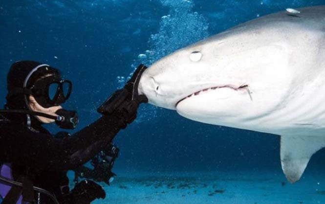 Στο εσωτερικό του στόματος ενός καρχαρία (1)