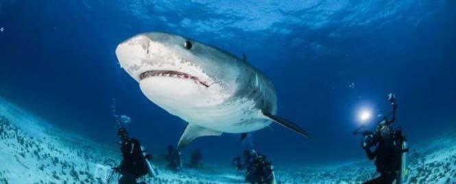 Στο εσωτερικό του στόματος ενός καρχαρία (4)