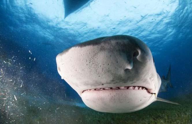 Στο εσωτερικό του στόματος ενός καρχαρία (5)
