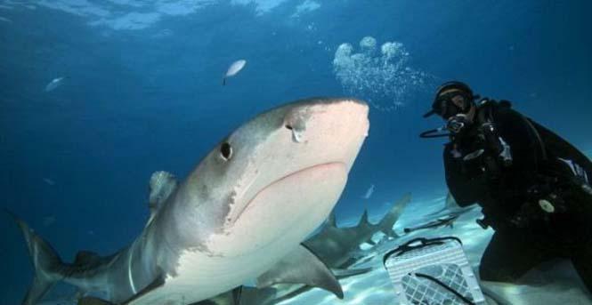 Στο εσωτερικό του στόματος ενός καρχαρία (6)
