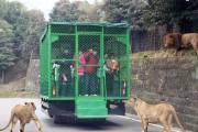Ζωολογικός κήπος αντιστρέφει τους ρόλους (1)