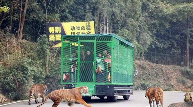 Ζωολογικός κήπος αντιστρέφει τους ρόλους (2)