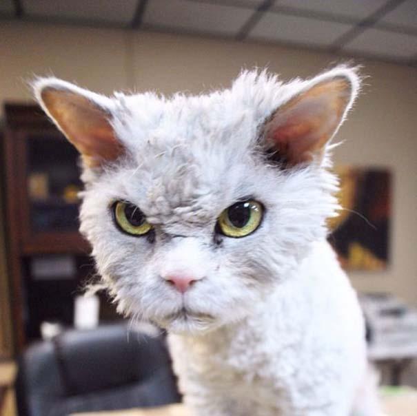 Albert, ο γάτος που μοιάζει να θέλει να δολοφονήσει τους πάντες (1)