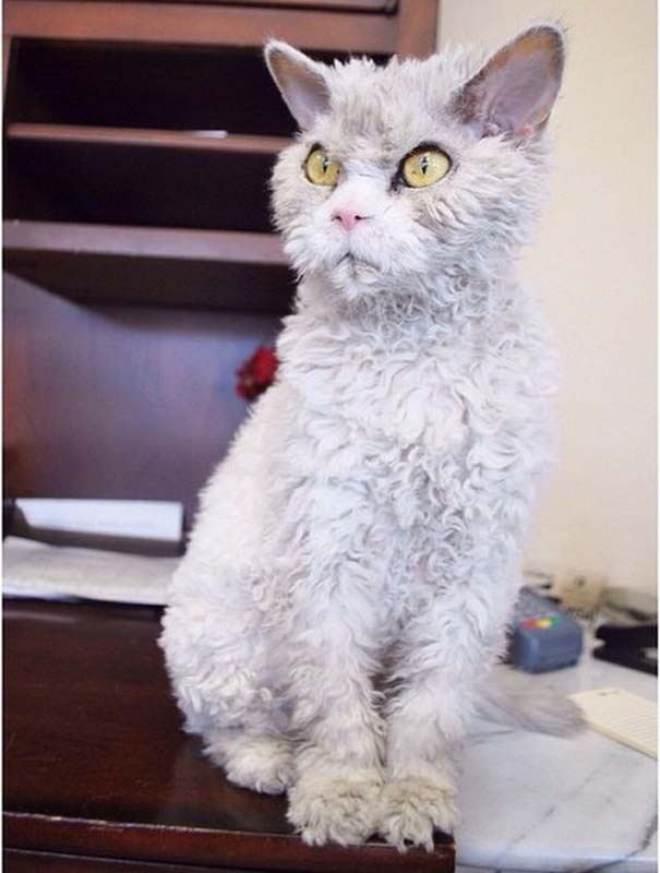 Albert, ο γάτος που μοιάζει να θέλει να δολοφονήσει τους πάντες (2)