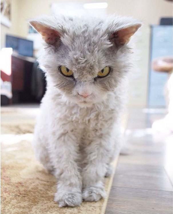 Albert, ο γάτος που μοιάζει να θέλει να δολοφονήσει τους πάντες (3)