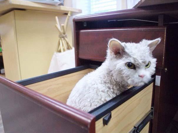 Albert, ο γάτος που μοιάζει να θέλει να δολοφονήσει τους πάντες (4)