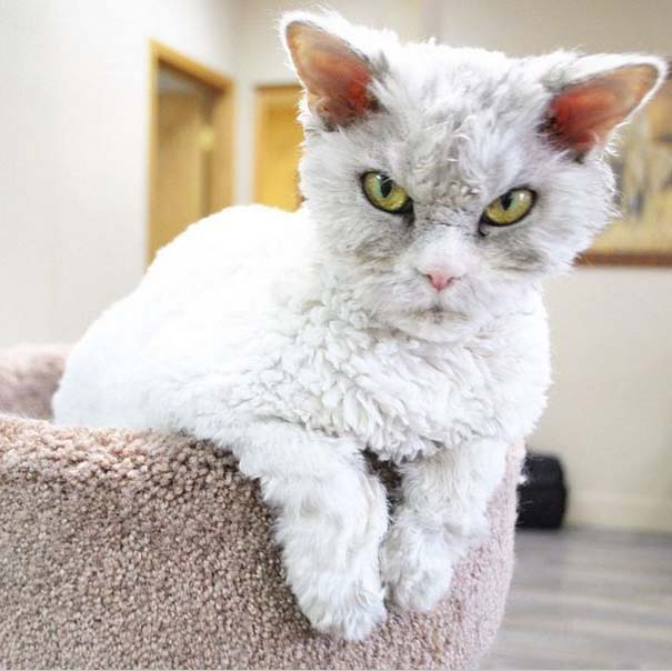 Albert, ο γάτος που μοιάζει να θέλει να δολοφονήσει τους πάντες (5)