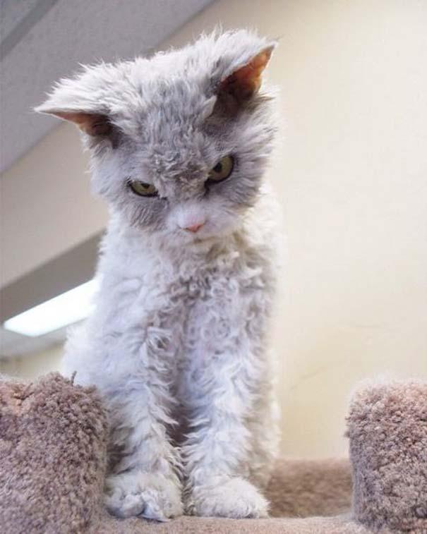 Albert, ο γάτος που μοιάζει να θέλει να δολοφονήσει τους πάντες (6)