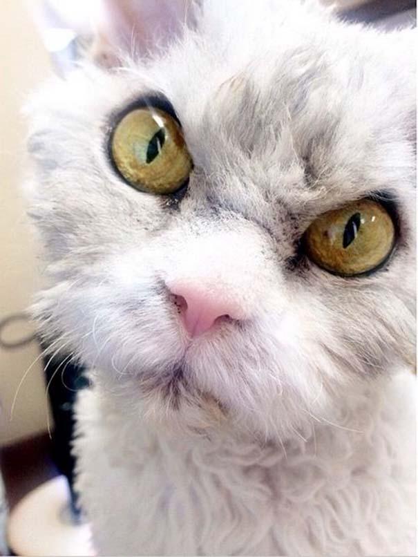 Albert, ο γάτος που μοιάζει να θέλει να δολοφονήσει τους πάντες (9)
