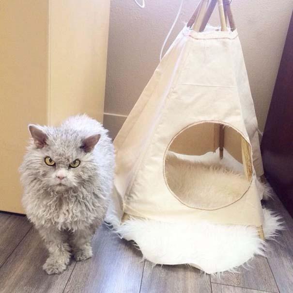 Albert, ο γάτος που μοιάζει να θέλει να δολοφονήσει τους πάντες (10)