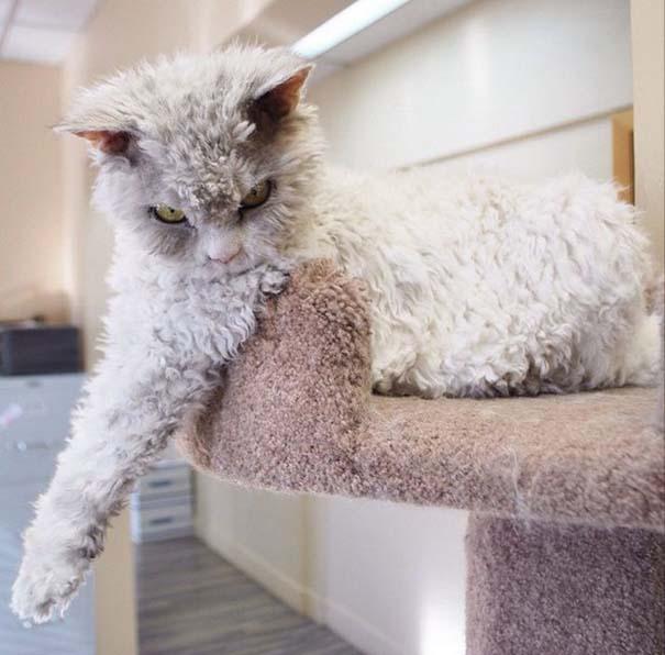 Albert, ο γάτος που μοιάζει να θέλει να δολοφονήσει τους πάντες (11)