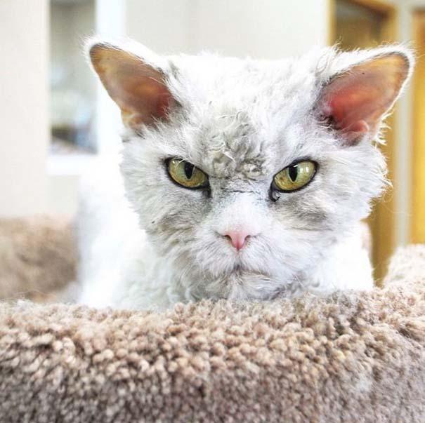 Albert, ο γάτος που μοιάζει να θέλει να δολοφονήσει τους πάντες (12)